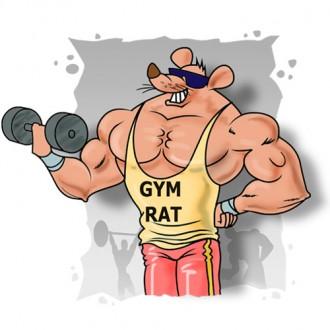 gym_rat.jpg